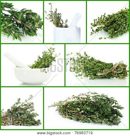 Fresh green thyme collage