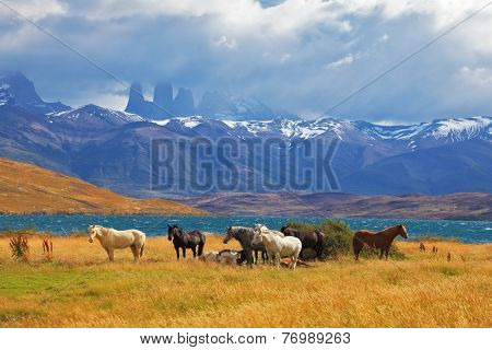On the horizon, towering cliffs Torres del Paine. Beautiful thoroughbred horse grazing in a meadow near the lake