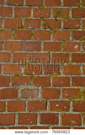 Old Red Brick Wall With Lichens Background