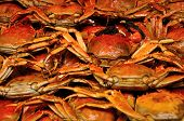 picture of cooked crab  - Cooked Shanghai China hairy crabs ready to be eaten - JPG