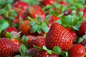 pic of strawberry plant  - Bunch of red ripe fresh strawberries in a basket - JPG