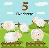 pic of counting sheep  - Illustrator of number five sheep in the farm - JPG