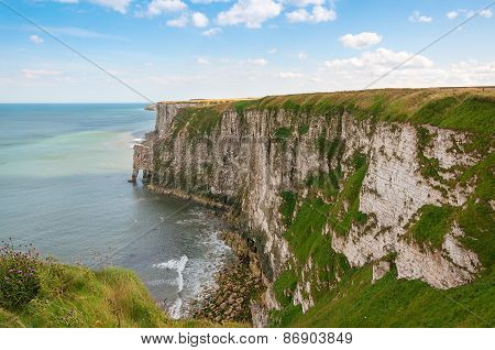 Chalky Cliffs At Bempton In Yorkshire Uk
