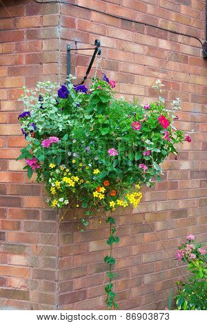 Basket Of Colorful Plants Hanging Against A Wall