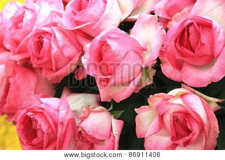 Pink with white roses