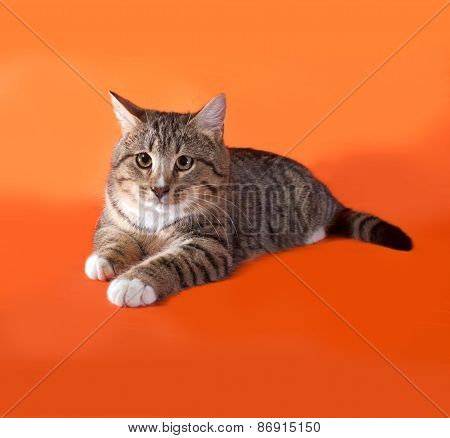 Tabby And White Cat Lying On Orange