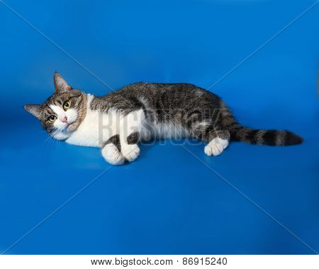 White And Tabby Cat Lying On Blue
