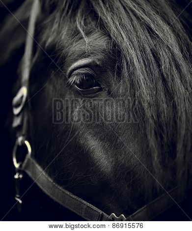 Eye Of A Black Horse.
