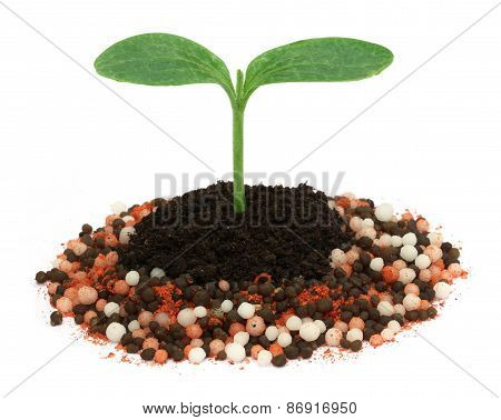 Plant In Chemical Fertilizer