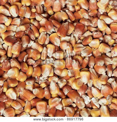 dry corn texture
