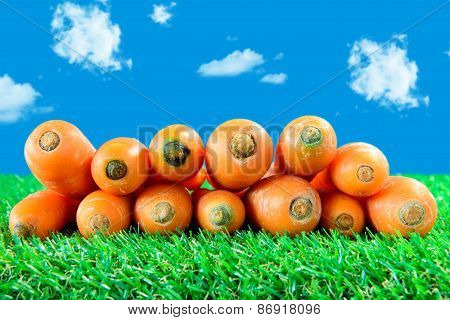 Several Carrots On Green Grass