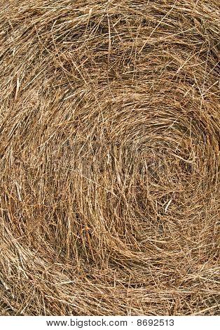 Golden Hay Background