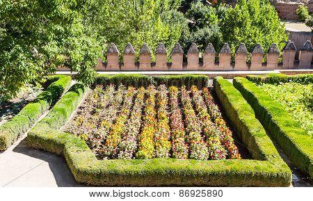 Tagetes Garden In Spring Season