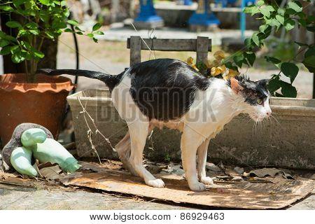 Wash Cat