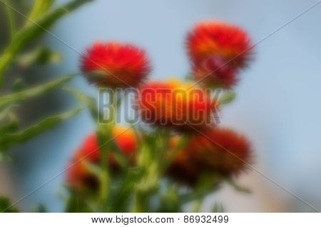Blurred Seasonal Flowers With Defocssued Background
