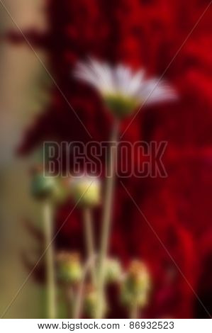 Blurred Seasonal Flowers With Red Background