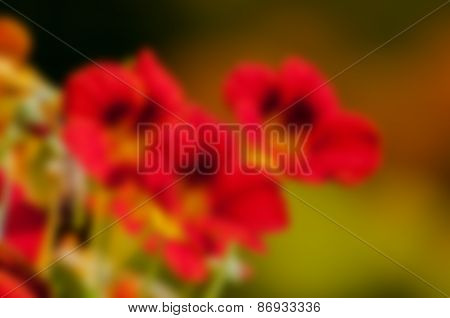Blurred Seasonal Flowers With Defocussed Background