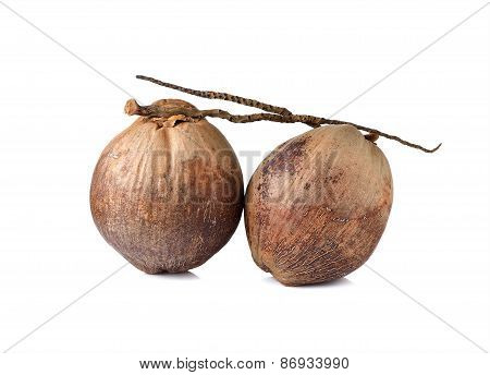 Whole Mature Coconut With Stem On White Background