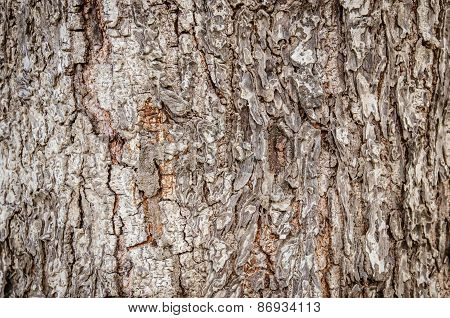 Closeup Of Dry Rough Bark Of Old Tree As Background Backdrop Or Texture