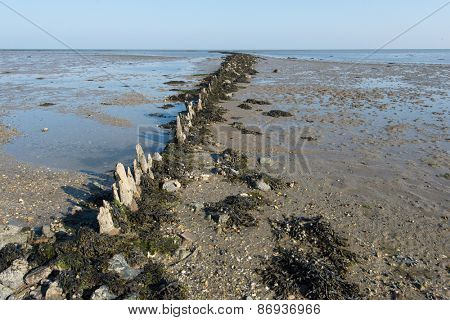 Shallow mudflat in Dutch wadden sea at Terschelling