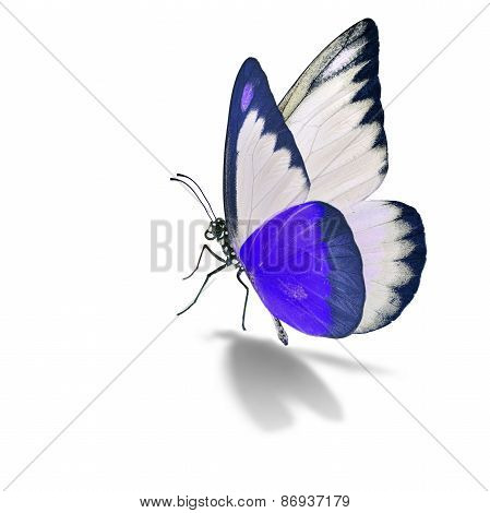 Purple And White Butterfly
