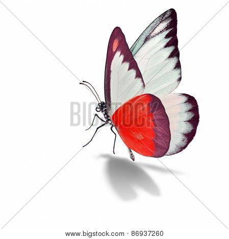 Red And White Butterfly