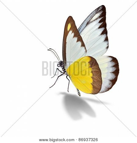 Yellow And White Butterfly