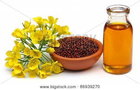 Mustard Flowers, Seeds And Oil