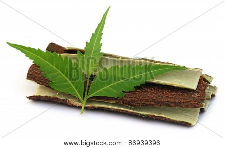 Medicinal Neem Leaves With Bark Of Tree