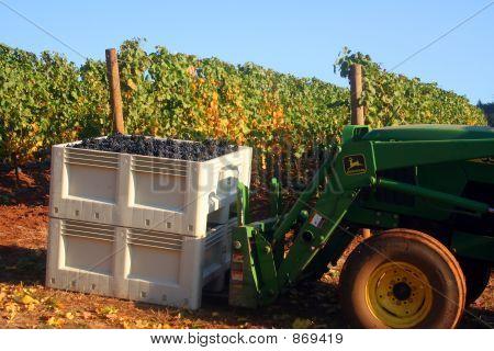 Tractor Picking Up Grape Bin