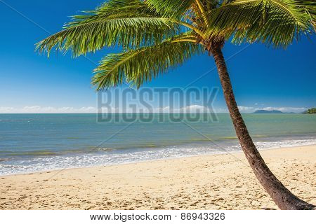 Single palm tree at Palm Cove beach in north Queensland, Australia