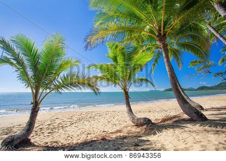 Palm trees at tropical Palm Cove beach in north Queensland, Australia