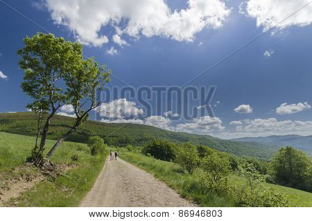 Tree on the mountain path