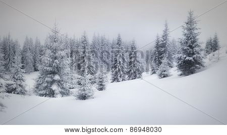 Winter Landscape In The Forest.