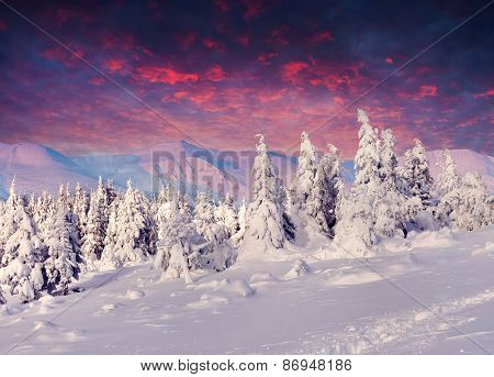 Fantastic Winter Lanscape In The Mountains