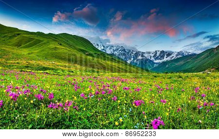 Beautiful View Of Alpine Meadows In The Caucasus Mountains