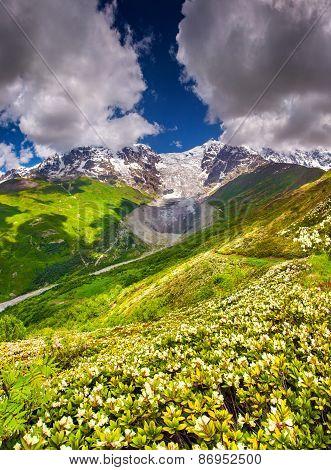 Alpine Meadows At The Foot Of Tetnuldi Glacier, Chkhutnieri Pass