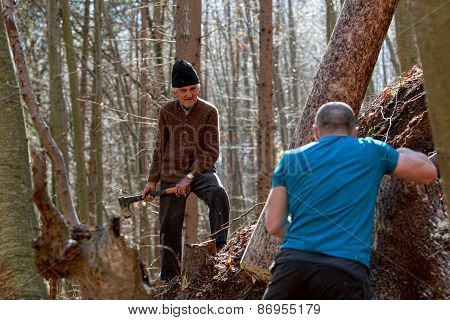 Woodcutters Working In The Forest