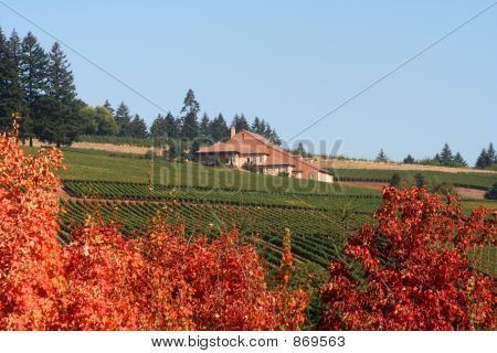 Autumn Vineyards and Winery