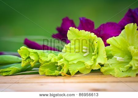 Green And Violet Gladioli Flowers On Blurred Background