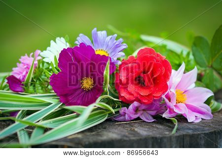 Close-up Of Bright Colorful Garden Flowers