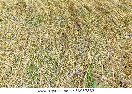 Background Of  Field Land Floral Covering View From Above