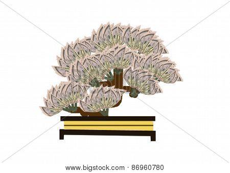 Bonsai Money Tree 02