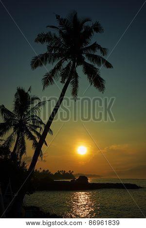 Coconut palms on the ocean