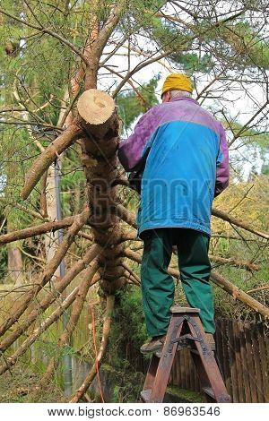 Senior Cutting Down A Fallen Tree
