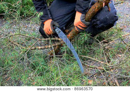 Gardener Cutting Down Branches