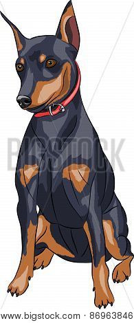 Vector. Miniature Pinscher Dog.