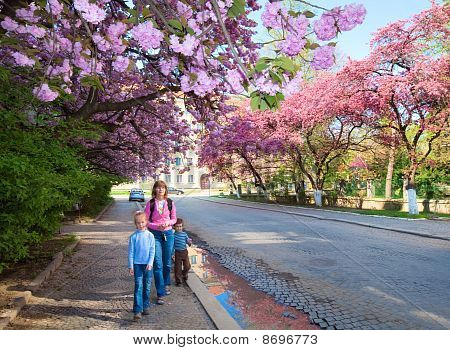 Pink  Japanese Cherry Blossom And Happy Family