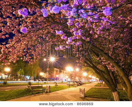 Night Urban View With Japanese Cherry Blossom