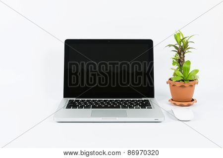 Laptop And Flower Pot Isolate
